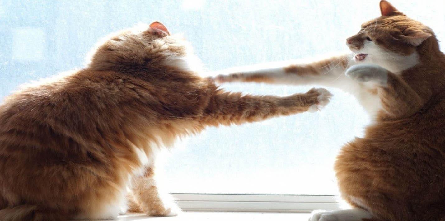 Кошачий бокс