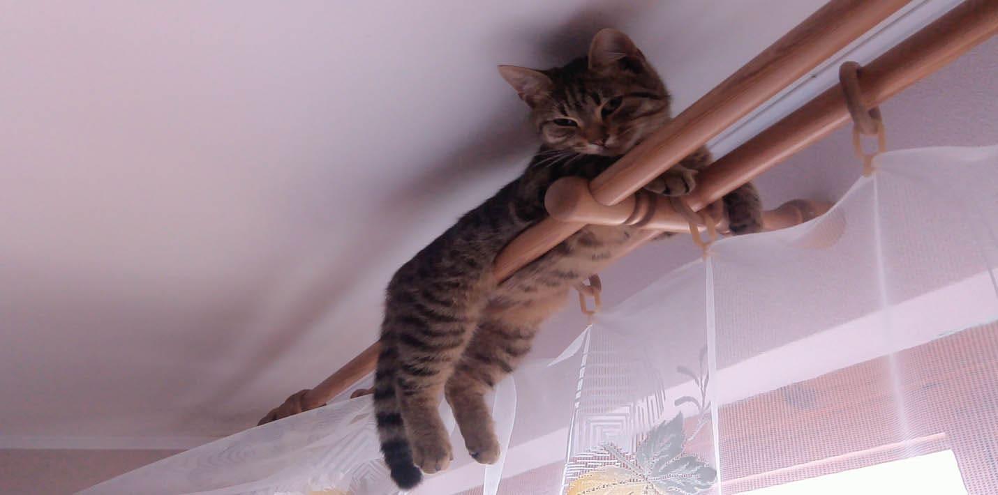 Кошачьи прыжки в высоту