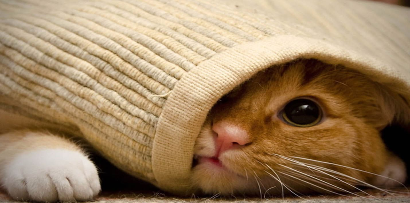 Кошачьи прятки