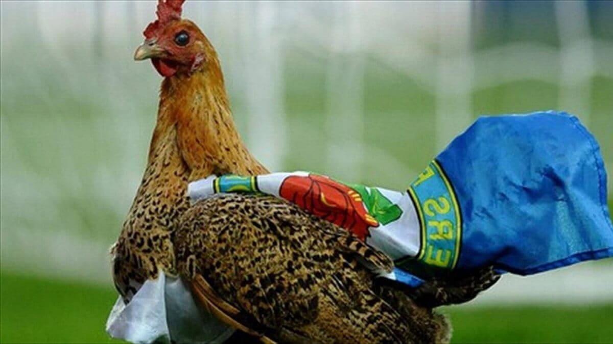 Животные на футбольном поле