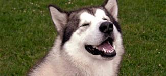 Собака-тренер помогает качать пресс
