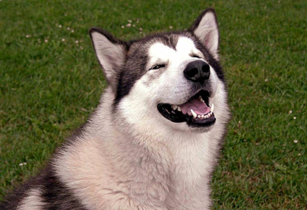 Как собака помогает качать пресс