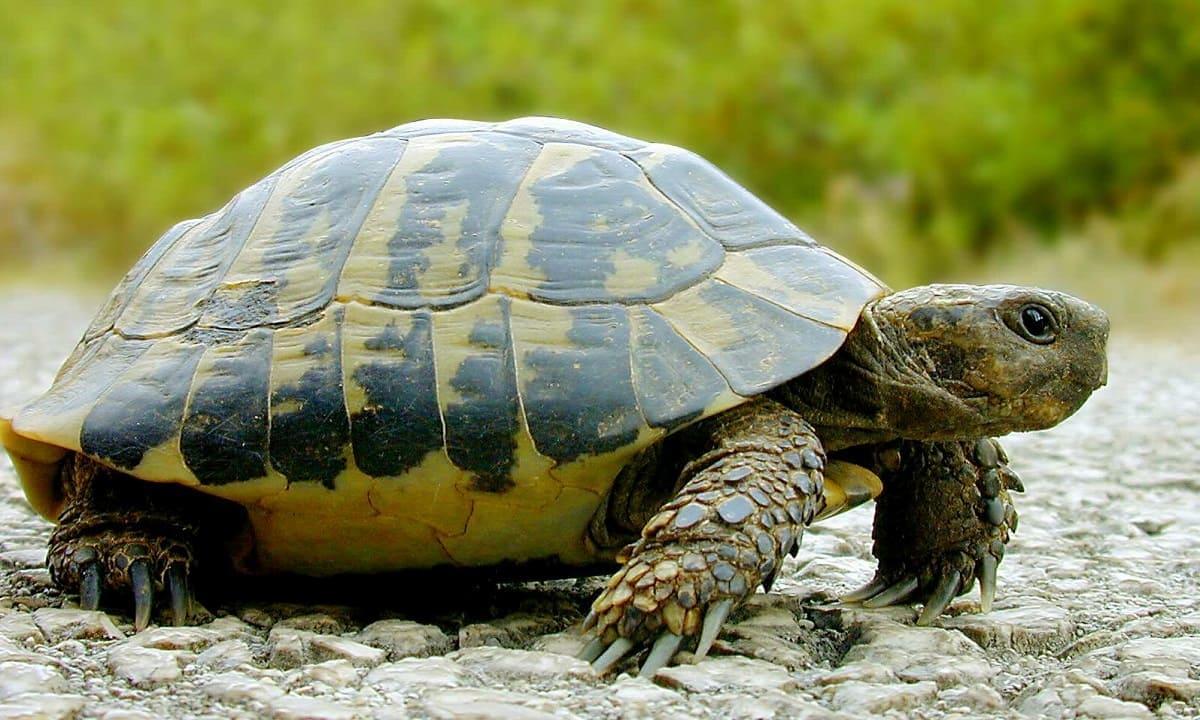 Черепаха-прогнозист